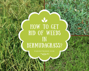 How To Get Rid Of Weeds In Bermudagrass?