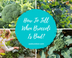 How To Tell When Broccoli Is Bad?