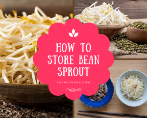 How To Store Bean Sprout