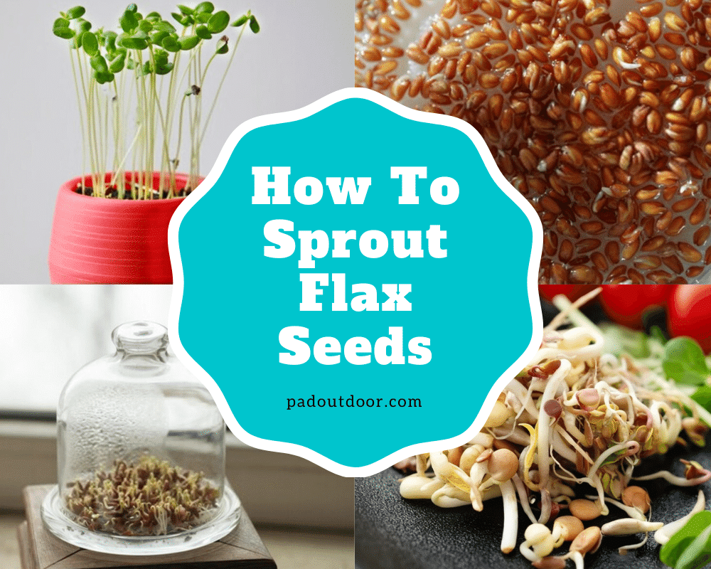 How To Sprout Flax Seeds