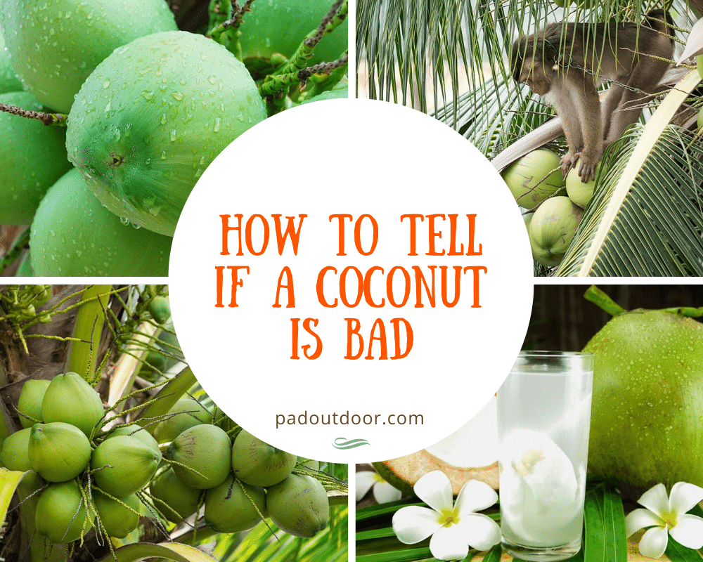 How To Tell If A Coconut Is Bad